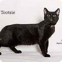 Adopt A Pet :: Tootsie - Lake Elsinore, CA