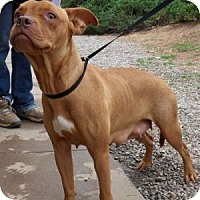 Adopt A Pet :: Grace - Athens, GA
