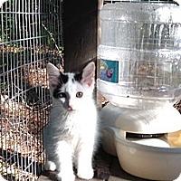 Adopt A Pet :: Trevor - Monroe, GA