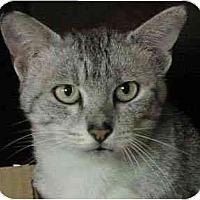Adopt A Pet :: Isamau - Davis, CA