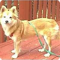 Adopt A Pet :: Foxy - dewey, AZ