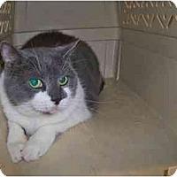 Adopt A Pet :: Peek-a-boo - Secaucus, NJ