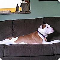 Adopt A Pet :: Vito - Elderton, PA