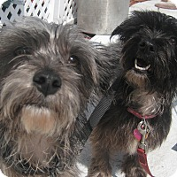 Adopt A Pet :: Abby & JoJo - Orange Park, FL