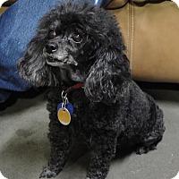 Adopt A Pet :: Ashley - Meridian, ID