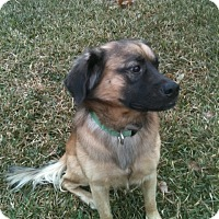 Adopt A Pet :: TEDDY - Jacksonville, FL