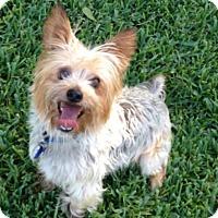Adopt A Pet :: Dustin - Conroe, TX