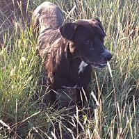 Adopt A Pet :: Dudley - Comanche, TX