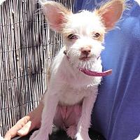 Adopt A Pet :: Laverne - West Los Angeles, CA