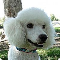 Adopt A Pet :: Perri - Walnut Creek, CA