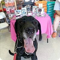 Adopt A Pet :: Milton - Mesa, AZ