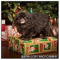 Adopt A Pet :: Iris - Owensboro, KY