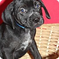 Adopt A Pet :: Crout - Waldorf, MD