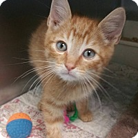 Adopt A Pet :: Louie - Carencro, LA