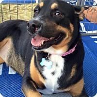 Adopt A Pet :: ELF - Phoenix, AZ