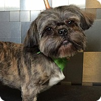 Adopt A Pet :: Fred Astaire - McKinney, TX