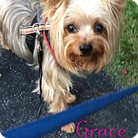 Adopt A Pet :: Grace - House Springs, MO