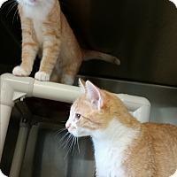 Adopt A Pet :: Sun - Chippewa Falls, WI