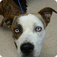 Adopt A Pet :: Irock - Ashtabula, OH