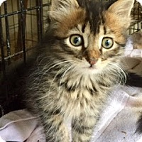Adopt A Pet :: Libby - McKinney, TX