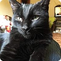 Adopt A Pet :: Solomon - Evans, WV