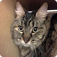 Adopt A Pet :: Miss Fancy Lady - Arlington/Ft Worth, TX