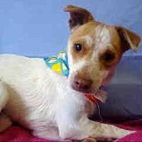 Adopt A Pet :: Lance - Encino, CA