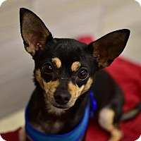 Adopt A Pet :: Tinkerbell - Greenfield, IN