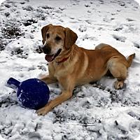 Adopt A Pet :: Ralph - Woodburn, OR