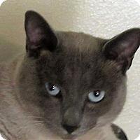 Adopt A Pet :: Chester - Davis, CA