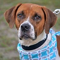 Adopt A Pet :: Livia - Hazlehurst, GA