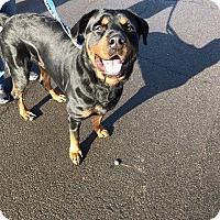 Adopt A Pet :: Moose - Rexford, NY
