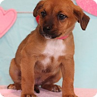 Adopt A Pet :: Zolly - Waldorf, MD