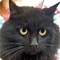 Adopt A Pet :: 335074 - Wildomar, CA