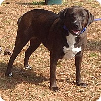 Adopt A Pet :: Mary Pearl - Sneads Ferry, NC