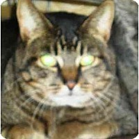Adopt A Pet :: LaSalette - Summerville, SC