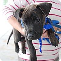 Adopt A Pet :: Sigmund - Orlando, FL