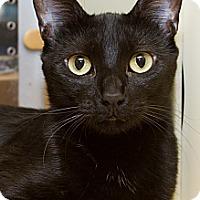 Adopt A Pet :: Ashanti - Irvine, CA