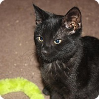Adopt A Pet :: Cinder (LE) - Little Falls, NJ