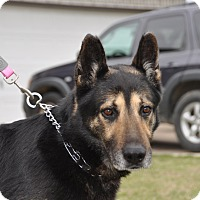 Adopt A Pet :: Duke - Dripping Springs, TX