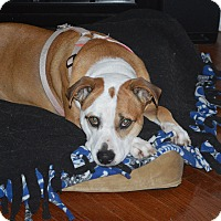 Adopt A Pet :: Maggie Moo - Indianapolis, IN