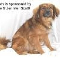 Chow Chow/Shepherd (Unknown Type) Mix Dog for adoption in Jackson, Mississippi - Lindsey