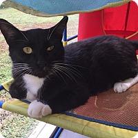 Adopt A Pet :: Lucky Boy - Boca Raton, FL