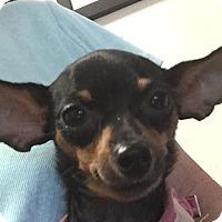 Adopt A Pet :: Mabelb - San Marcos, CA