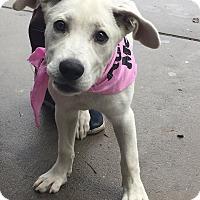 Adopt A Pet :: Elsa - Lincolnton, NC