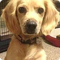 Adopt A Pet :: Gavin-ADOPTION PENDING - Boulder, CO