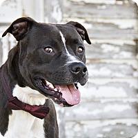 Adopt A Pet :: Loki - Windsor, VA