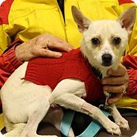 Adopt A Pet :: Chino - Elyria, OH