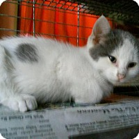 Adopt A Pet :: Spot - Bourbonnais, IL
