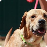 Adopt A Pet :: Hobo - Batavia, NY
